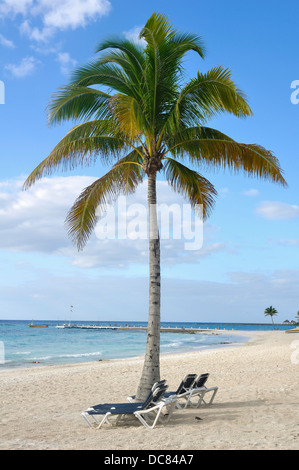 Beach in Mexico - Beach Chairs under Palm Tree on Quintana Roo Tropical Beach on the Yucatan Peninsula, Mexico - Stock Photo