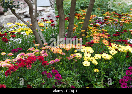 Planter with daisies in Bolzano center town - Stock Photo