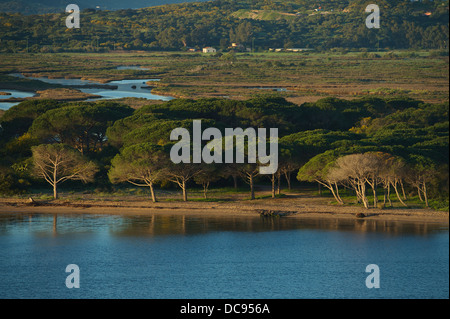 Approaching the prot of Olbia with the ferry boat. View of beach with trees - Stock Photo
