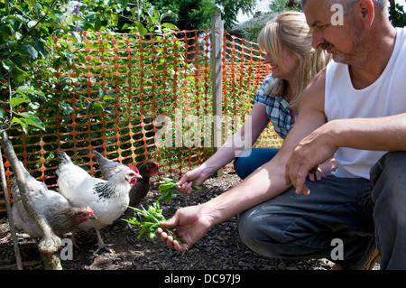 Caucasian couple feeding free range chickens dandelion leaves, taken in garden in Bristol, UK - Stock Photo