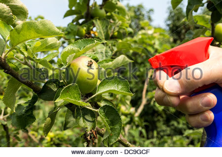 Spraying apple tree with pesticide - Stock Photo