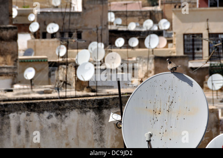 A bird sit at the satellite dish with other dishes blurred at the background in Fez Medina, Morocco - Stock Photo