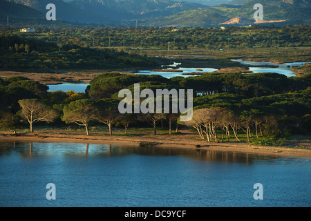 Approaching the prot of Olbia with the ferry boat, View of beach with trees - Stock Photo