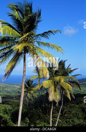 View, St Andrew Parish. Barbados. West Indies. Caribbean - Stock Photo
