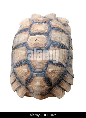 Texture of Turtle carapace isolated white background. - Stock Photo