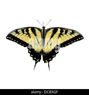 Eastern Tiger Swallowtail Butterfly Isolated On White - Stock Photo