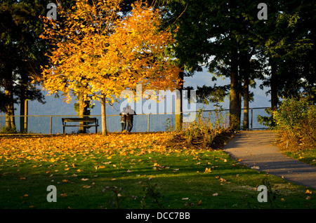 Romantic couple takes in the view from Burnaby Mountain Park. Autumn leaves on the ground. in Greater Vancouver, - Stock Photo