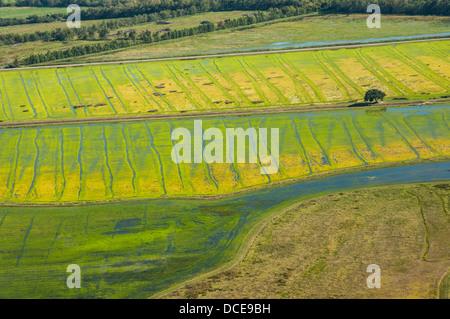 USA, Louisiana, Atchafalaya Basin area, St Martin Parish, working wetlands of rice and crawfish (small dots are - Stock Photo