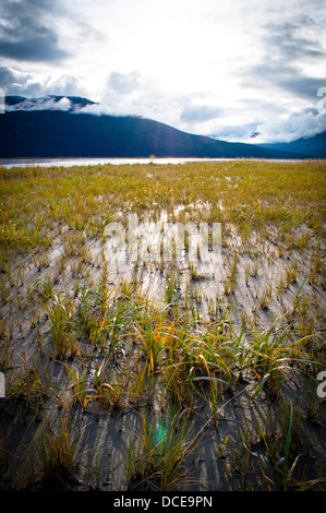 Grassy shoreline near Anchorage, Alaska - Stock Photo