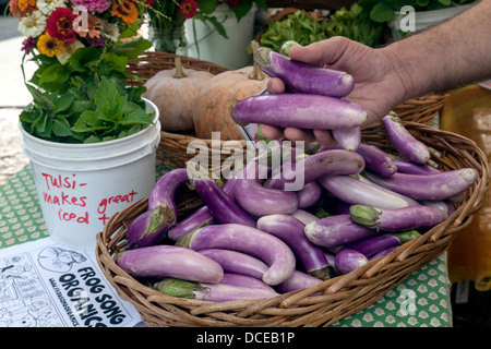 Italian and Japanese eggplants, Tulsi and Pumpkins in a wicker basket for sale in farmer's market. - Stock Photo