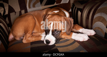 Portrait Of Dog Resting On Chair - Stock Photo