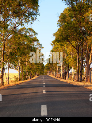 Deserted straight tree-lined tarred road with central markings disappearing in to the distance - Stock Photo