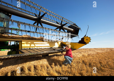 A Woman Works On A Combine In A Wheat Field; Three Hills, Alberta, Canada - Stock Photo