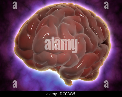 Conceptual image of human brain. - Stock Photo