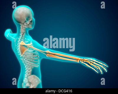 X-ray view of human body showing skeletal bones in the arm and hand. - Stock Photo