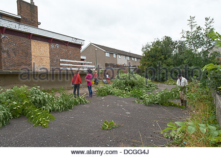 Nottingham, UK. 17th Aug, 2013. Work underway clearing the overgrown grounds of a derelict pub for the community - Stock Photo