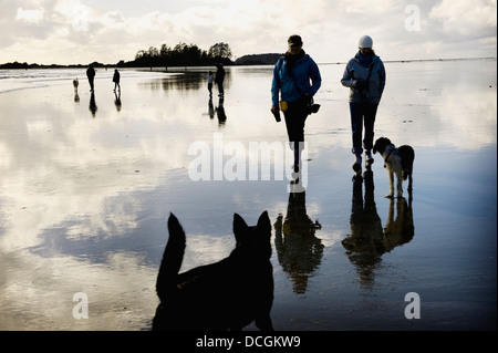 Walking On Beach With Dogs, Tofino, Vancouver Island, British Columbia, Canada - Stock Photo