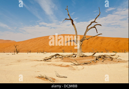 Dead camel thorn trees in the clay pan of Deadvlei in Namibia - Stock Photo