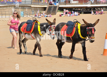 donkeys on beach, Skegness, Lincolnshire, England, UK - Stock Photo