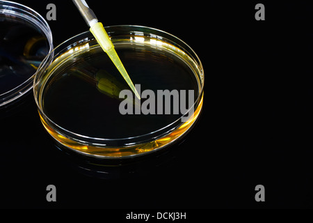 Petri dish filled with Agar fluid for medical research into bacterial cultures often used in colleges and for biotechnology - Stock Photo