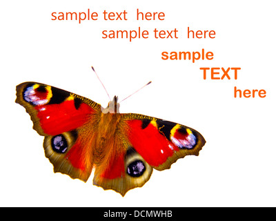 butterfly on white background with room for text - Stock Photo