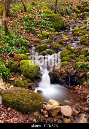 Small waterfall on tributary of the River Wharfe, Bolton Abbey, West Yorkshire, England, United Kingdom, Western - Stock Photo