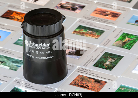 Photographic slides on light box with lupe - Stock Photo