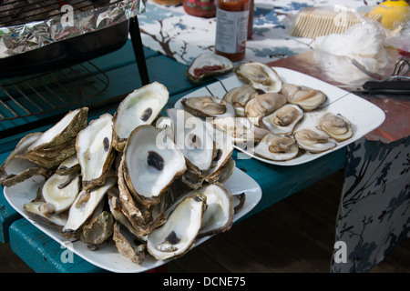 Grilled Fresh Oysters - Stock Photo