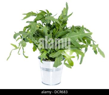 Arugula Salad isolated on white background - Stock Photo