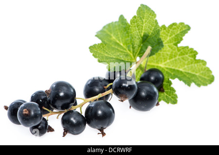Isolated Black Currants (on white background) - Stock Photo