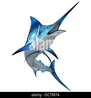 The Blue Marlin is a popular big game fish for fishermen and inhabits oceans throughout the world. - Stock Photo