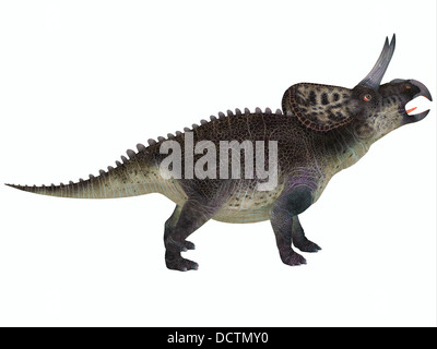 Zuniceratops was a genus of Ceratopsian dinosaur that was a herbivore and lived in North America in the Cretaceous - Stock Photo