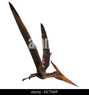 Pteranodon was a reptilian bird from the Late Cretaceous of North America. - Stock Photo