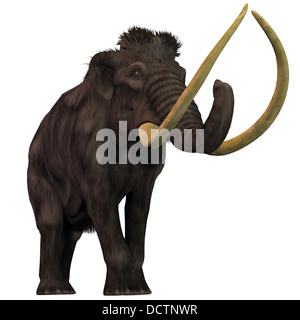 Woolly Mammoths are extinct herbivorous mammals that lived from the Pleistocene to the Holocene Periods. - Stock Photo