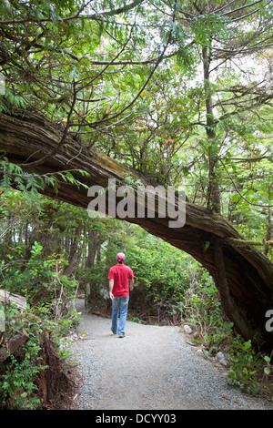 A Man Hiking Along The Wild Pacific Trail On Vancouver Island; Ucluelet, British Columbia, Canada - Stock Photo