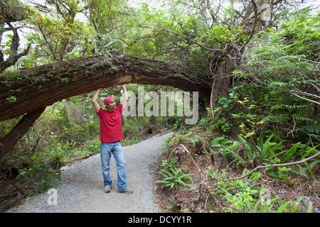 A Man Enjoys His Hike Along The Wild Pacific Trail On Vancouver Island; Ucluelet, British Columbia, Canada - Stock Photo