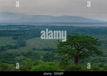 Tanzania, Central, Manyara, Lake Manyara, Great Rift Valley, baobab, Africa - Stock Photo