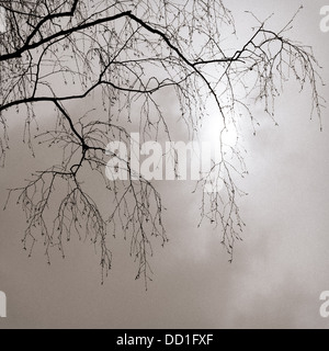 February Sun. Leafless branches and twigs of a tree against cloudy sky and pale winter sun - Stock Photo