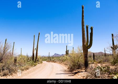 Road through Saguaro National Park West, Tucson, Arizona, USA - Stock Photo