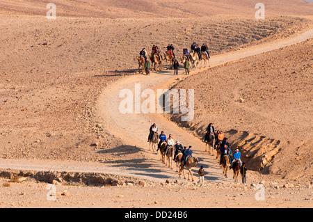 Camel tour convoy, Israel - Stock Photo