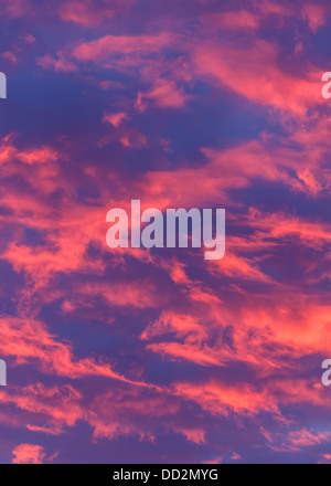Glowing pink clouds set alight from a vivid sunset, with a blue sky, shot in vertical format. Natural abstract background - Stock Photo