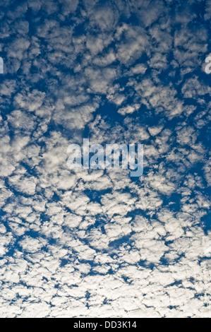 Mackerel sky / Altocumulus clouds and Poplar trees - France. - Stock Photo