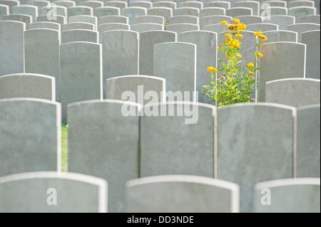 Headstones at WW1 military cemetery of the Commonwealth War Graves Commission for First World War One British soldiers, - Stock Photo