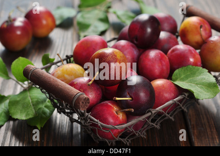 Fresh plums in metal basket on wooden background closeup - Stock Photo