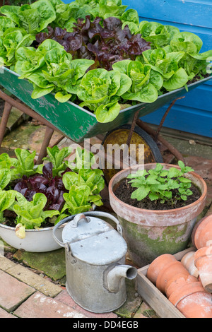 ... Small Garden Corner With Old Wheelbarrow And Old Enameled Bowl Planted  With Lettuce Varieties U0027Little