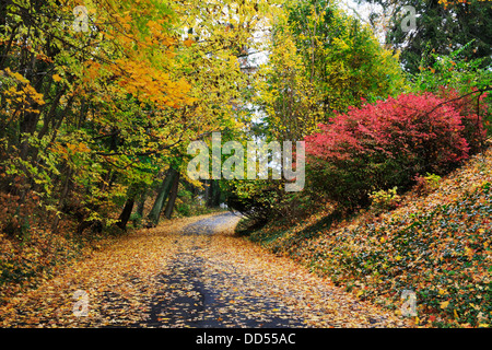 A Canopy Of Colorful Trees Over A Quiet Cemetery Road On A Rainy Day In Autumn, Southwestern Ohio, USA - Stock Photo