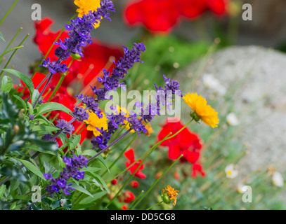 Mix of flowers in the flowerbed. - Stock Photo