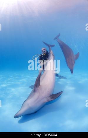 Diver and two Bottlenose dolphin (Tursiops truncatus), Dolphinarium, Odessa, Odessa Oblast, Ukraine, Europe - Stock Photo