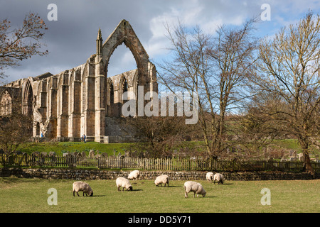Bolton Abbey, Yorkshire Dales National Park, Wharfdale, North Yorkshire, England, United Kingdom - Stock Photo