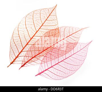 Transparent Skeleton Leaves On White Background - Stock Photo